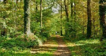 Avantages et inconvénients des investissements forestiers